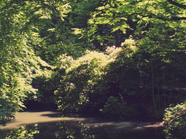 Wald Borbeck1_klein