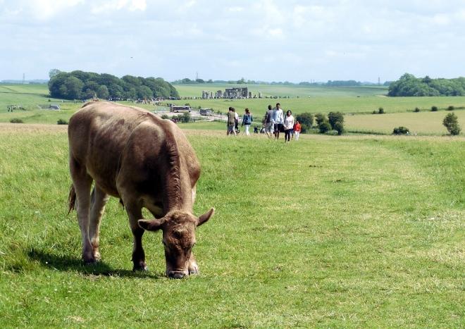 Kuh mit Stonehenge_web